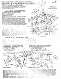 Immune System For Kids Worksheets Human immune system reacts ...