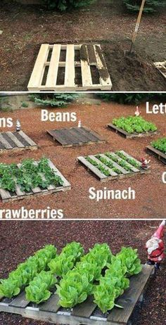 Wooden Pallet Vegetable Gardening 25 neat garden projects with wood pallets Easy DIY Garden Vegetable Garden Planner, Backyard Vegetable Gardens, Garden Landscaping, Garden Plants, Landscaping Ideas, Vegetable Ideas, Backyard Farmer, Vegetable Farming, Luxury Landscaping