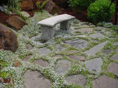 Sprawling and Spilling Plants for Paved Areas: Isotoma fluviatilis 'Blue Star Creeper' (Laurentia)