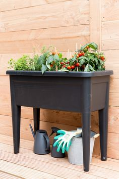 Grow Table Google Search In 2019 Garden Pots Garden Houseplants