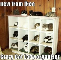 """Is it bad that I know this is supposed to be funny, but I looked at it and thought """"Oh what a good idea!"""" LOL I love how there is a little piece of fabric in each box. Would it truly make me a crazy cat lady if I actually tried to do this?"""