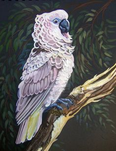 Moluccan Cockatoo by *HouseofChabrier on deviantART
