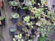 http://www.unquadratodigiardino.it/novita/idee-in-giardino/147-piccolo-giardino-in-verticale-di-piante-grasse.html