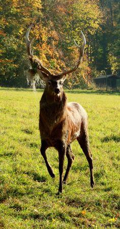 Nature Hirsch