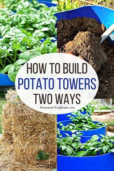 Our post walks you through the step by step process of building towers to grow your potatoes. We share two methods that we use and have had years of success with. Hydroponic Gardening, Hydroponics, Gardening Tips, Urban Gardening, Urban Farming, Indoor Gardening, Vegetable Gardening, Planting Seeds, Planting Succulents