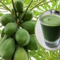 How To Drink Papaya Leaf Juice To Detoxify Liver, Reverse Fatty Liver And Stop Liver Cancer. The leaves of papaya are very useful in healing and curing Liver Detox Cleanse, Detox Your Liver, Body Detox, Jus Detox, Body Cleanse, Natural Detox Drinks, Natural Cleanse, Natural Healing, Healthy Detox