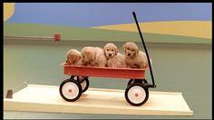 Dog Goldberg Machine