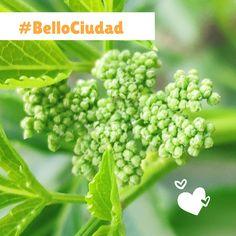 BelloCiudad #NestorLeon Bellisima, Fruit, Cities