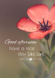 Good Afternoon Images Hd, Good Afternoon Quotes, Good Morning Beautiful Images, Good Morning Love, Gd Morning, Good Morning Flowers Quotes, Afternoon Messages, Good Morning Massage, Romantic Good Night Image