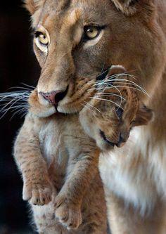 Momma & baby