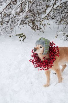 Cranberry Wreathes -  Dog Christmas Cards Ideas For Anyone Who's Obsessed with Their Pup  - Photos