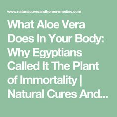 What Aloe Vera Does In Your Body: Why Egyptians Called It The Plant of Immortality | Natural Cures And Home Remedies Natural Cures, Natural Health, Diy Aloe Vera Gel, Natural Kitchen, Food Hacks, Food Tips, Egyptians, Home Remedies, A Team