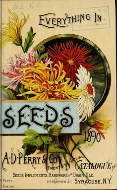 1890 - A. D. Perry & Co.'s twentieth annual catalogue of flower, field and garden seeds, implements and drain tile, &c. / - Biodiversity Her...