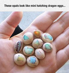 Mini Dragon Eggs
