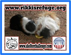 6/12/15 - Please VOTE & SHARE for RIKKI'S REFUGE in the Animal Rescue Site SHELTER CHALLENGE every day! Thank you! Vote here: http://www.shelterchallenge.com/web/charityusa/shelter-details?userId=53992&nomineeId=17448