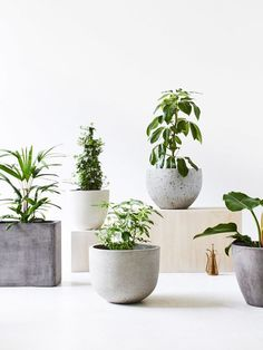 Plant pots from left to right. Styling with concrete planters and pots