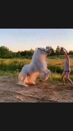 Beautiful Nature Pictures, Beautiful Horses, Animals Beautiful, Unusual Animals, Funny Animal Memes, Funny Animal Videos, Cute Funny Animals, Animal Pictures, Funny Pictures