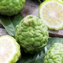 Citrus Tree - Kaffir Lime: This lime boasts a fresh, zesty flavour and is widely used in thai cooking. Originally from Thailand, it remains a little-known citrus fruit, but deserves to be much… Kumquat Tree, Citrus Trees, Fruit Trees, Kaffir Lime Plant, Caviar Lime, Sutton Seeds, All Fruits, Orange Fruit, Pots