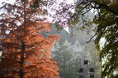 Reisen: Im Stadtwäldchen in Budapest. Der rote Baum war einfach sooo schön <3