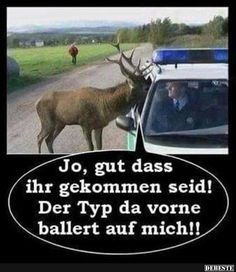 Humor, jokes, funny memes and other crazy stuff. Funny Hunting Pics, Deer Hunting Humor, Hunting Jokes, Funny Deer, Moose Hunting, Hunting Signs, Funny Animal Jokes, Funny Animal Pictures, Funny Photos