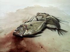 Fish Photos by Giles Revell for Port Magazine