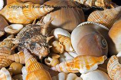 Sea Shore Still Life Kevin Dickinson fine art photography, canon photography