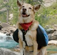 Hiking and camping with dogs- tips and tricks #dogs #camping #safety #bestfriends #hiking #camping #smiles #yakima #takemorefriends