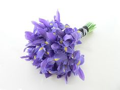 Purple Iris  Season: Spring to Early Summer  Cost: Moderate - Expensive