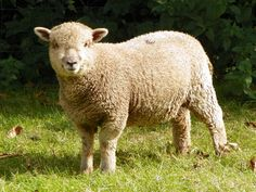 5 Alarming Facts About the Wool Industry