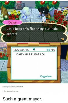 Animal Crossing Memes - Crossing with Animals - Acnl Animal Crossing Funny, Animal Crossing Pocket Camp, Anime Animals, Funny Animals, Geeks, Best Memes, Funny Memes, Hilarious, Memes Humor