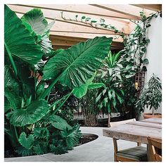 This is what indoor garden d r e a m s are made of