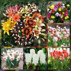 Bulbi de Toamna Potted Flowers, Flower Pots, Romania, Floral Wreath, Wreaths, Plants, Beautiful, Decor, Life