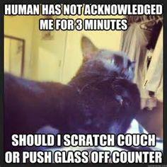 Pondering Cat - Bing images