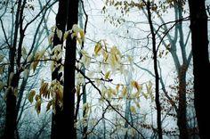 Goodsofyou: Image 24h - Forest
