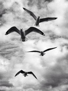 (21) Black and White   Tumblr