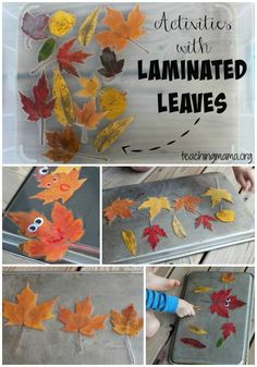 with Laminated Leaves Activities with Laminated Leaves There are so many fun activities to do with them pretend play sorting sizing counting and moreActivities with Lami. Autumn Crafts, Fall Crafts For Kids, Autumn Art, Autumn Theme, Fun Activities To Do, Autumn Activities, Toddler Activities, Fall Preschool, Preschool Activities