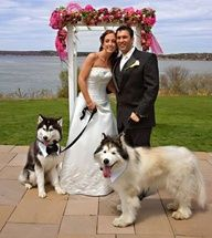 I'm repinning this because of the leash. Any other dog wedding, no leash needed. A wedding with a husky (or Mal.)...leash is required wear! lol #dog wedding