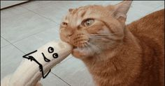 Gato asesino - GiFeate
