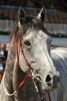 Puissance De Lune (IRE) heads back to Weir stables : Australia Horse Breeding and Racing news updated daily, www.thoroughbrednews.com.au