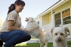 8 Tips For Boarding a Dog with Separation AnxietyWays to make the experience of staying at a kennel easier for your anxious dog Going into a boarding kennel Dog Separation Anxiety, Dog Anxiety, Anxiety Tips, Mobile Vet, Dog Minding, Dog Training Classes, Training Tips, Pet Boarding, Wild Dogs