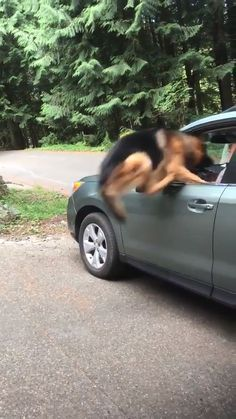 *runs around car* I'm going TO FIND A WAY! Close one I was gonna be left alone Cute Puppies, Cute Dogs, Dogs And Puppies, Cute Animal Videos, Funny Animal Pictures, Cute Funny Animals, Funny Dogs, Animals And Pets, Baby Animals