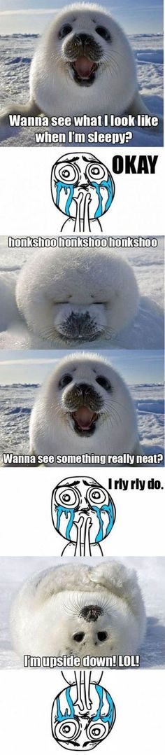 Funny pictures about Baby harp seal. Oh, and cool pics about Baby harp seal. Also, Baby harp seal photos. Funny Animal Memes, Cute Funny Animals, Funny Animal Pictures, Cute Baby Animals, Funny Cute, Animals And Pets, Funny Memes, Hilarious, Funny Pics