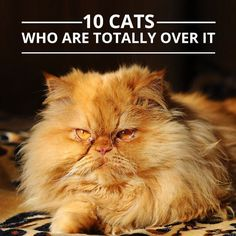 These #cats are SO over it! #pets #cats