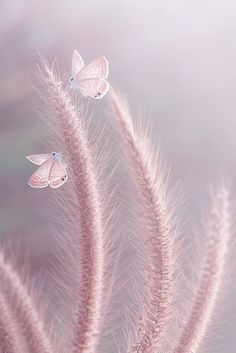 Raindrops and Roses: Photo Tarot Gratis, Cool Photos, Beautiful Pictures, Raindrops And Roses, Pink Aesthetic, Beautiful Butterflies, Soft Colors, Belle Photo, Pink Grey