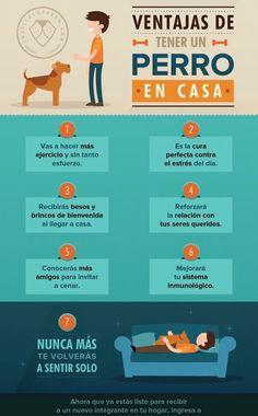 ¿ Conoces las enormes ventajas de tener un perro ?...