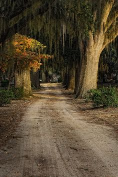"""In every walk in with nature one receives far more than he seeks. Photo by nature-hiking Tree Tunnel, Sweet Home Alabama, Back Road, Take Me Home, The Ranch, Pathways, Along The Way, Travel Usa, The Great Outdoors"