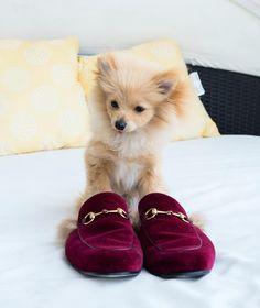 Kong Da Savage with Gucci Slides #kongdasavage #logang #dog #cutie