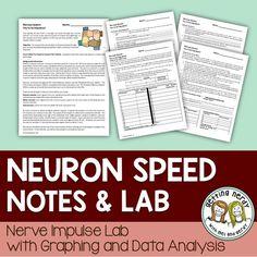 neuron system lab essay Neuron model   neuron   biology   pinterest neuron model  neuron model nursing students nervous system lab radiology physiology neuroscience  essay.