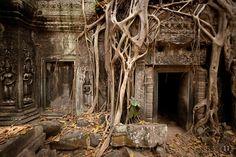 Banyan-tree-at-Ta-Prohm-Temple-IMG-1553.jpg (830×554)