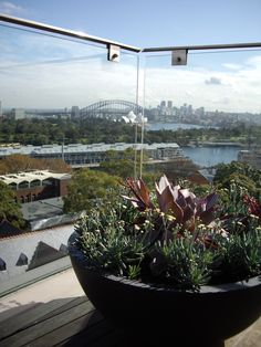 Echeveria and Senecio in LWC Deep Bowl with an amzing view #gardenlife #landscapedesign